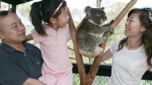 chinese-tourists-in-australia-china-elite-focus