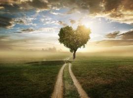 love life live nature family motivation path help tree