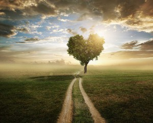 love life live nature family motivation path help tree