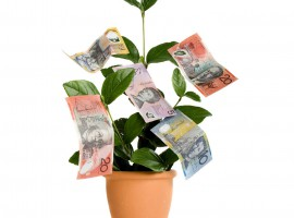 money tree rich growth wealth plant life aus notes