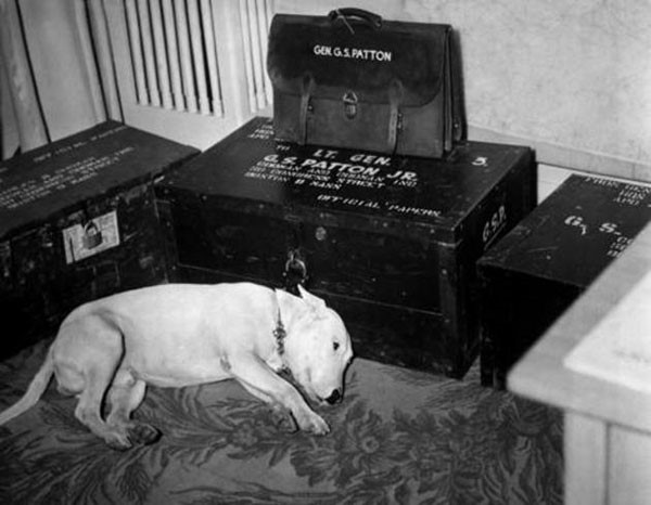24. George S. Patton's dog mourning his master on the day of his death