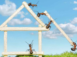 ant team work help guide build house pest control inspection