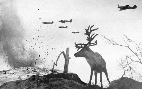 A shell-shocked reindeer looks on as war planes drop bombs on Russia in 1941
