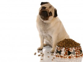 Property Investors: is being pet-unfriendly costing you money?