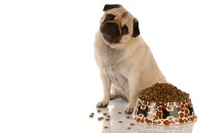 pet dog pug eat diet food friendly love rental