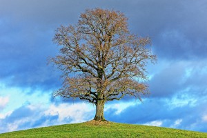 Tree 596453 1920