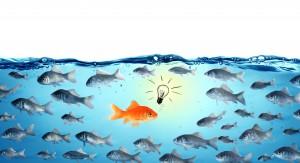 Against The Stream Opposite Concept Leader Goldfish