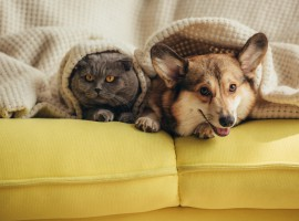 Can pets inherit property?