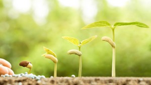 Planting Seeds Gardening Response